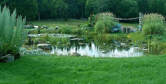 Trädgård trädgård damm : LÖVÖNS TRÄDGÅRDSDAMM