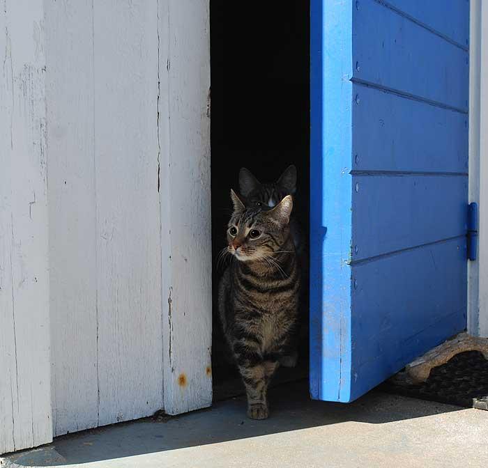 Antligen mandag en katt ligger kvar
